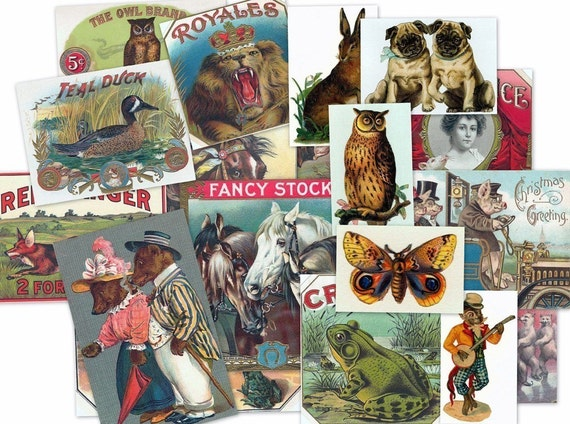 CD Vintage Victorian ANIMAL ILLUSTRATIONS Art and Photos Cats Dogs Horses Birds postcards