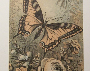 Victorian Trade Card Butterfly and Flowers Blue Buff Black Orange