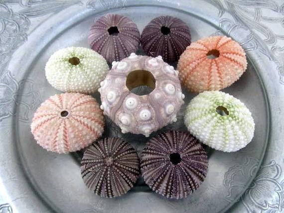 Shell Decor Sea Urchin Collection