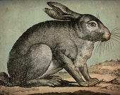 RABBIT Bunny Hare Engraving Gallery Wrapped Stretched Canvas Wall Art 9x12x1.5 inches signed