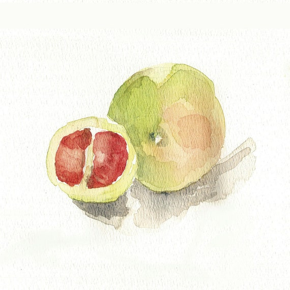 Blood grapefruit Study Archival Print of my  original watercolor painting limited edition , limited edition, kitchen decor