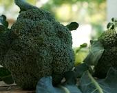 Broccoli Seeds, De Cicco
