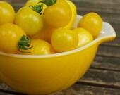 Photo - Sunshine Yellow Cherry Tomatoes - Food Photography Postcard Print