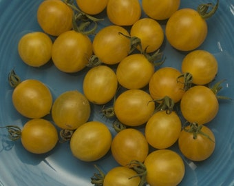 Coyote White Cherry Tomato Seeds