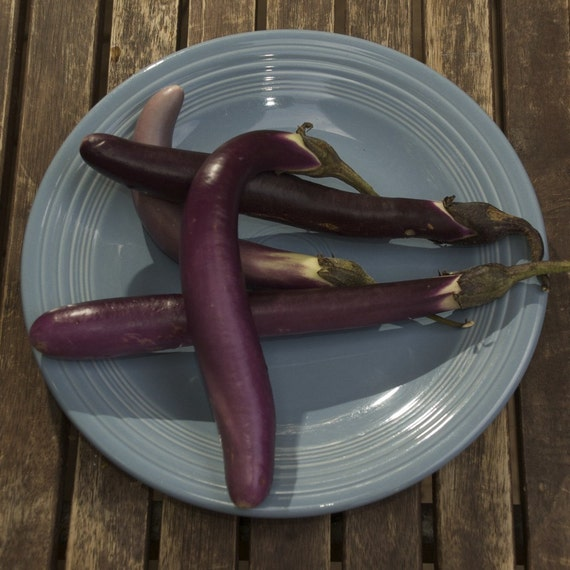 Organic Little Finger Eggplant Aubergine Seeds