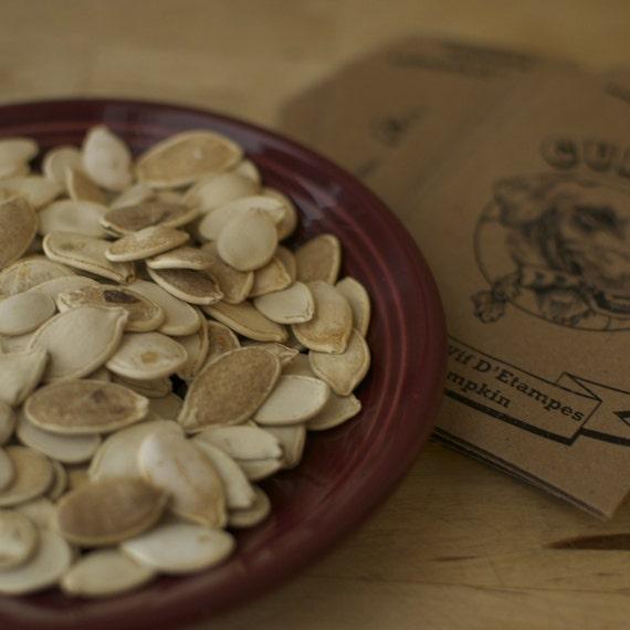 Rouge Vif D Etampes Pumpkin seeds