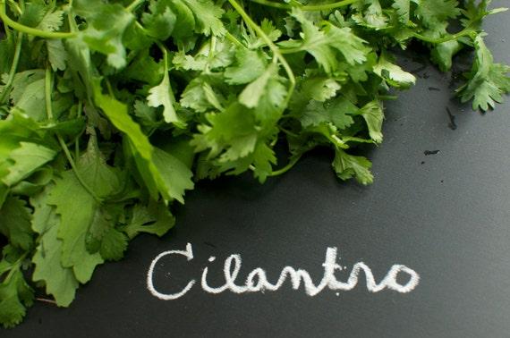 Cilantro Coriander Herb Seeds