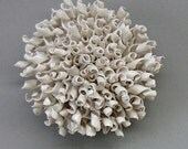 Porcelain Seed Wall Sculpture