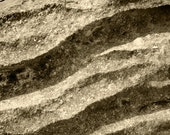 Curved Impression (Monochrome)  - photographic print - 8x8