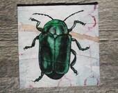SALE, green beetle, hand drawn original mixed media drawing