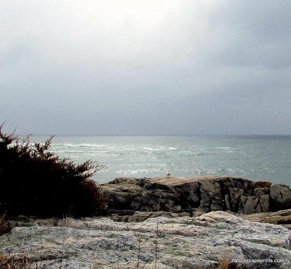 """Seagull Cove in Rye, NH 8""""x10"""" photo"""