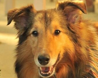 Your Beautiful Dog Pet Portrait Fine Art Photograph -  Print or Digital File