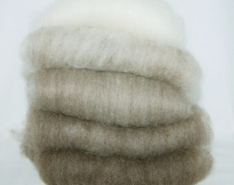 Shetland Brown to White Ombre Spinning Batts - 5 ounces