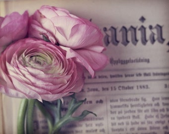 Ania, pink, ranunculus, old book, worn pages, I love books, Fine Art Photograph, 8x10