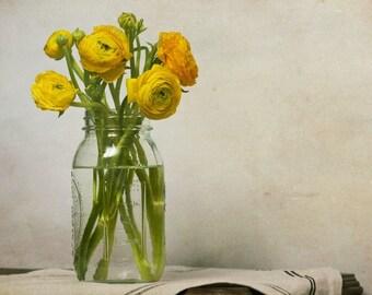 And You Remind Me, mason jar, yellow, ranunculus, Fine Art Photograph, 8x10
