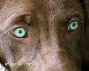 Soulful Eyes - Fine Art Photograph 8x10 Coco Brown Beauty/Green Eyed Beauty