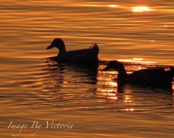 Sunset Duck Silhouette Fine Art Photograph Print- Wall Art - Nature Water Photo Water-Lake-Ducks-Sunset