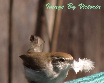 Birds of a Feather photo Mama Wren Makes Her Bed Soft As A Feather - Spring Nesting- Wall Decor- Nursery