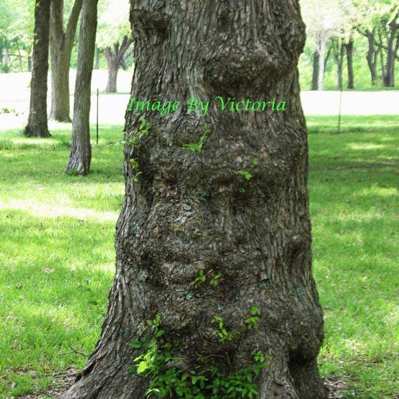 Sacred  Spirit Tree Photo- Spirits in the Woods- Fine Art Photo Tree Spirits Altar Art Wall Decor