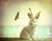 a jackalope wish revisited 8x10 fine art photography print