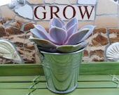 Succulent Favor And Silver Pail Sample, Rustic Wedding And Party Favors, As Seen On HGTV,COM, Special Event