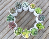 Succulent Centerpiece, White Ceramic, Table Top Decor, Great For A Wedding, Garden Party Or Special Event
