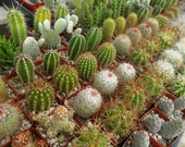 Cacti And Succulents, 6 Plants, Favors, Eco Friendly, Perfect For A Margarita Party, Southwest Event