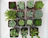 50 Succulents, Favors, Living Frames, Terrariums, Weddings, As Seen In Better Homes And Gardens