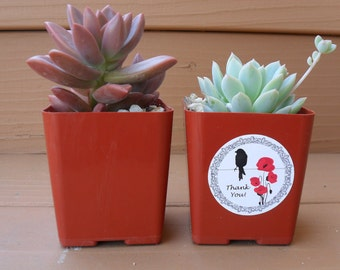 Reserved For Kami, 150 Succulent Favors, Deposit Has Been Paid, Lots Of Purple, Ship October 7