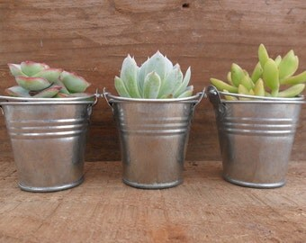 35 Succulents, Mini Pails, Silver Or White, Wedding And Party Favors, Special Event