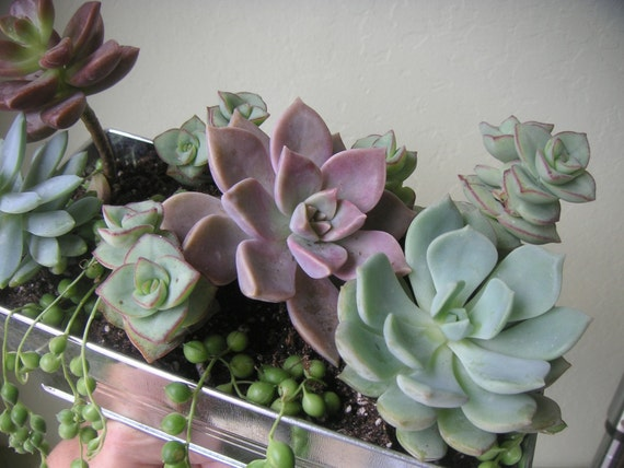 URBAN TABLETOP SUCCULENT GARDEN CENTERPIECE