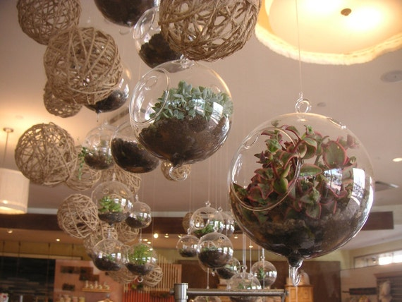 DIY, A Collection Of 9 Succulent Plants And 3 Glass Globes , Make Your Own Terrarium, Urban Chic