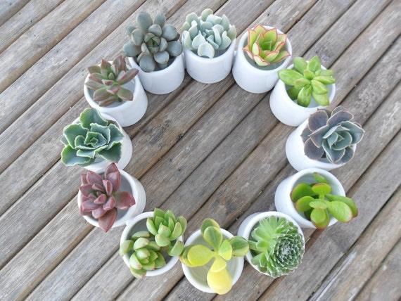 White Ceramic Succulent Centerpiece, Table Top Decor, Great For A Wedding, Garden Party Or Special Event