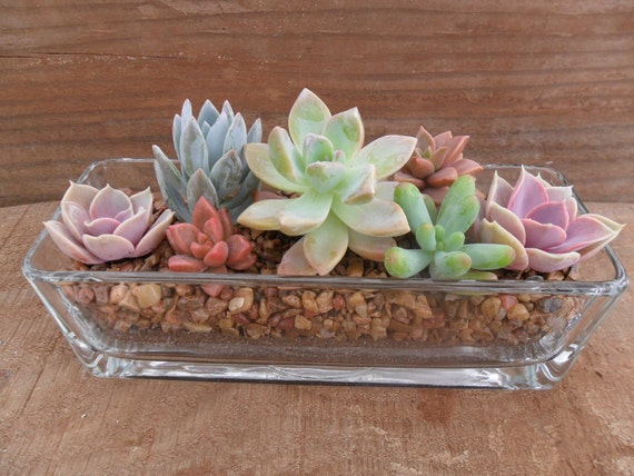 Succulent Centerpiece, Beautiful, Great For Weddings, Cocktail Parties And Other Special Events, Housewarming Gift