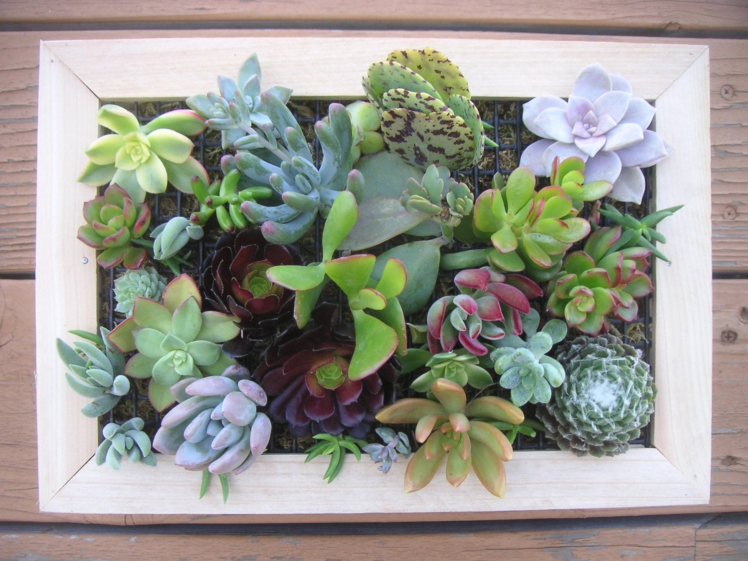 Glamorous 25 Succulent Wall Art Inspiration Of Growing A Vertical