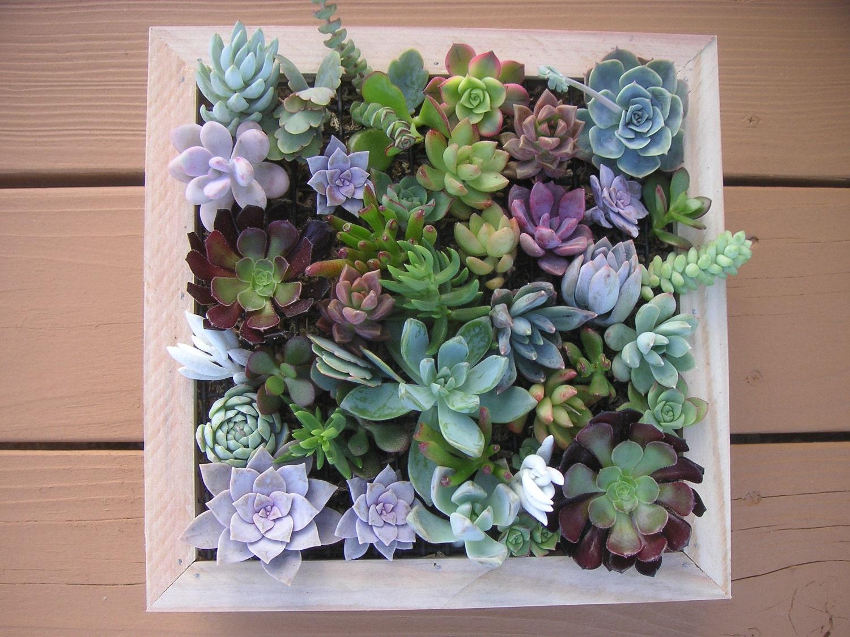 Succulent Wall Art Roselawnlutheran