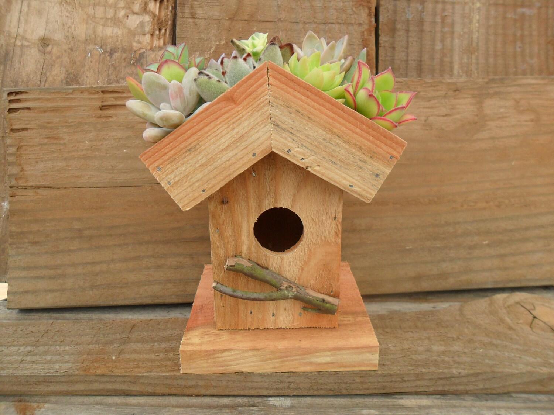 Living Roof Birdhouse Succulent Planter Diy Kit Succulent