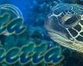 SEA TURTLE---- Etsy Shop Professional Custom Banner and Avatar