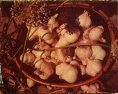 Garlic basket/ photo postcard