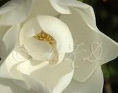 Magnolia - 4x6 Print