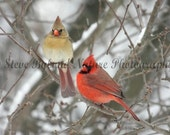 Northern Cardinal Photos- 5x7 Matted Signed Fine Art Photography - Free Shipping to the U.S. via Priority Mail