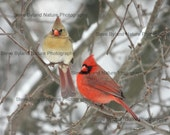 SALE - Cardinal Lovers Three Photo Pack - THREE 4X6 Matted Signed Photos - Free Shipping to the U.S.