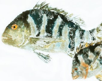 "Sheepshead - ""Mamma's Boy"" - Gyotaku Fish Rubbing - Limited Edition Print (27 x 17.25)"