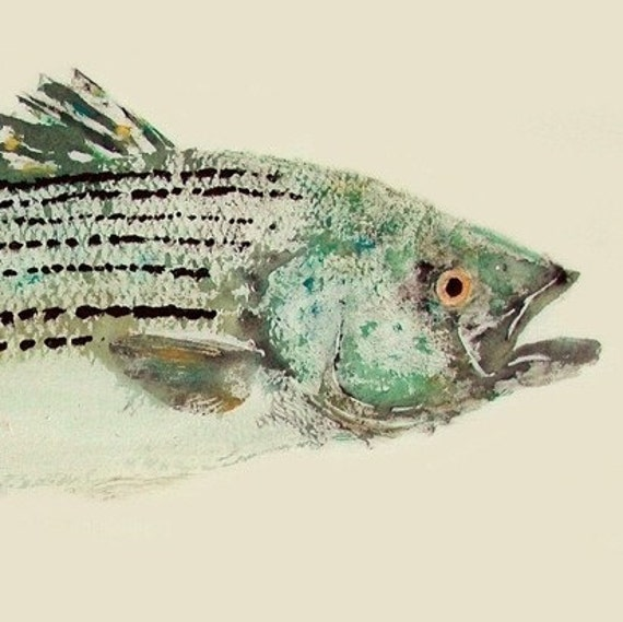 Striped Bass - Gyotaku Fish Rubbing - Limited Edition Print (25.25 x 11)