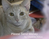 Please Send Money by Cheshire Kitten