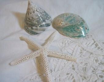 Seashells, Trochas, Starfish, Abalone - Mixed lot shells