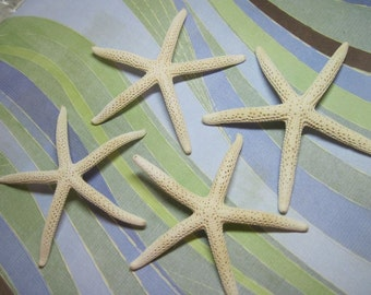 4 White Starfish - Sea Stars - Fingerling Starfish - White Pencil Sea stars