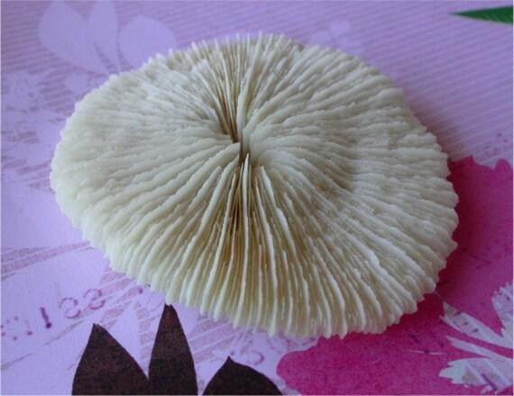 Private Listing for artsylauraserene1 Mushroom Coral