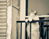 Cat Photograph, Paris Photo, Fine Art Paris Photograph, Cat Lovers, Montmartre, Balcony, Curiousity - Le Chat