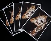 GIRAFFE NOTECARDS /set of five